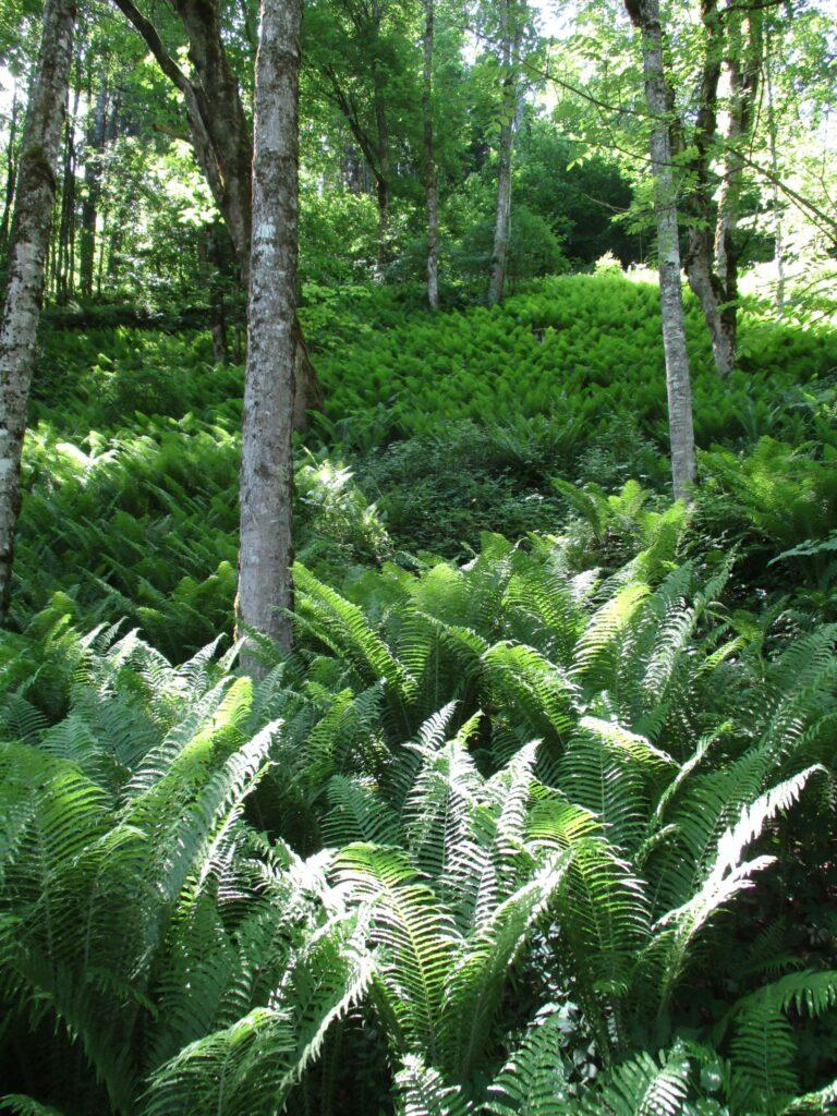 Im Wald bei der hintern Klamm